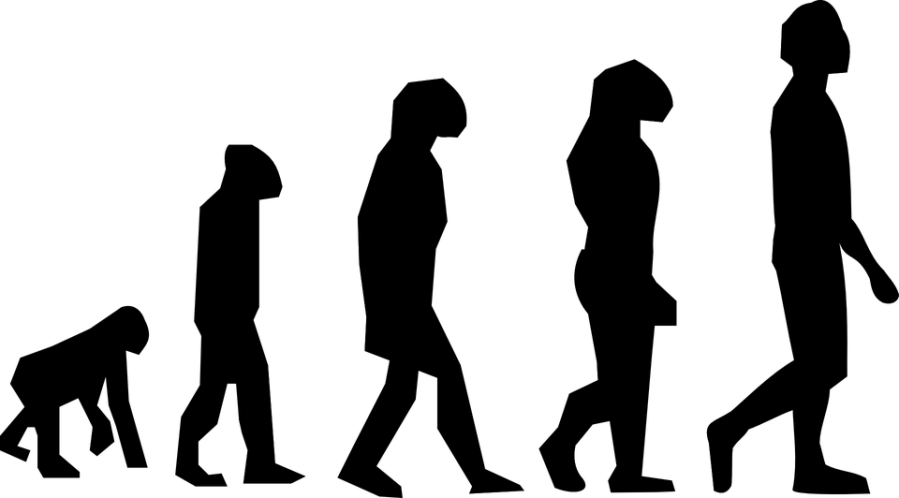 evolution-297234_960_720.png